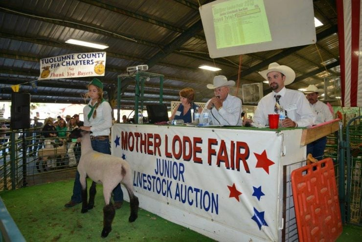 Junior Livestock Auction